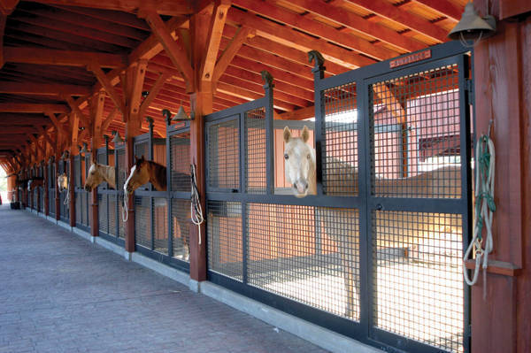 How To Keep Pests Out Of Your Barn And Horse Feed