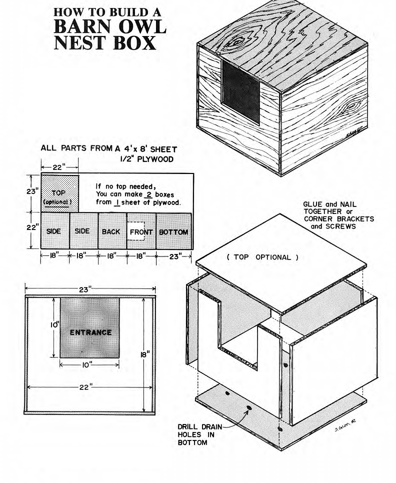 screech owl house plans building guide - arts
