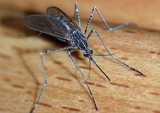preventing a mosquito infestation in your garden before spring starts