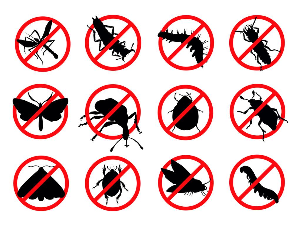Home Pest Control Clip Art – Cliparts
