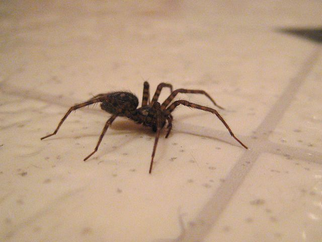 how to keep away spiders from your home australia