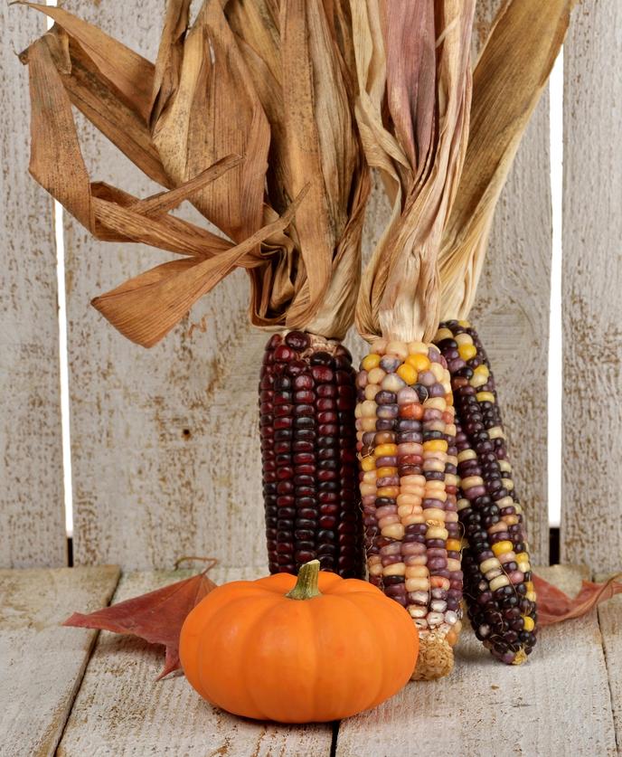 dried corn decor