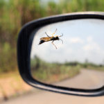 Mud dauber wasp standing on car window with left side car mirror in background