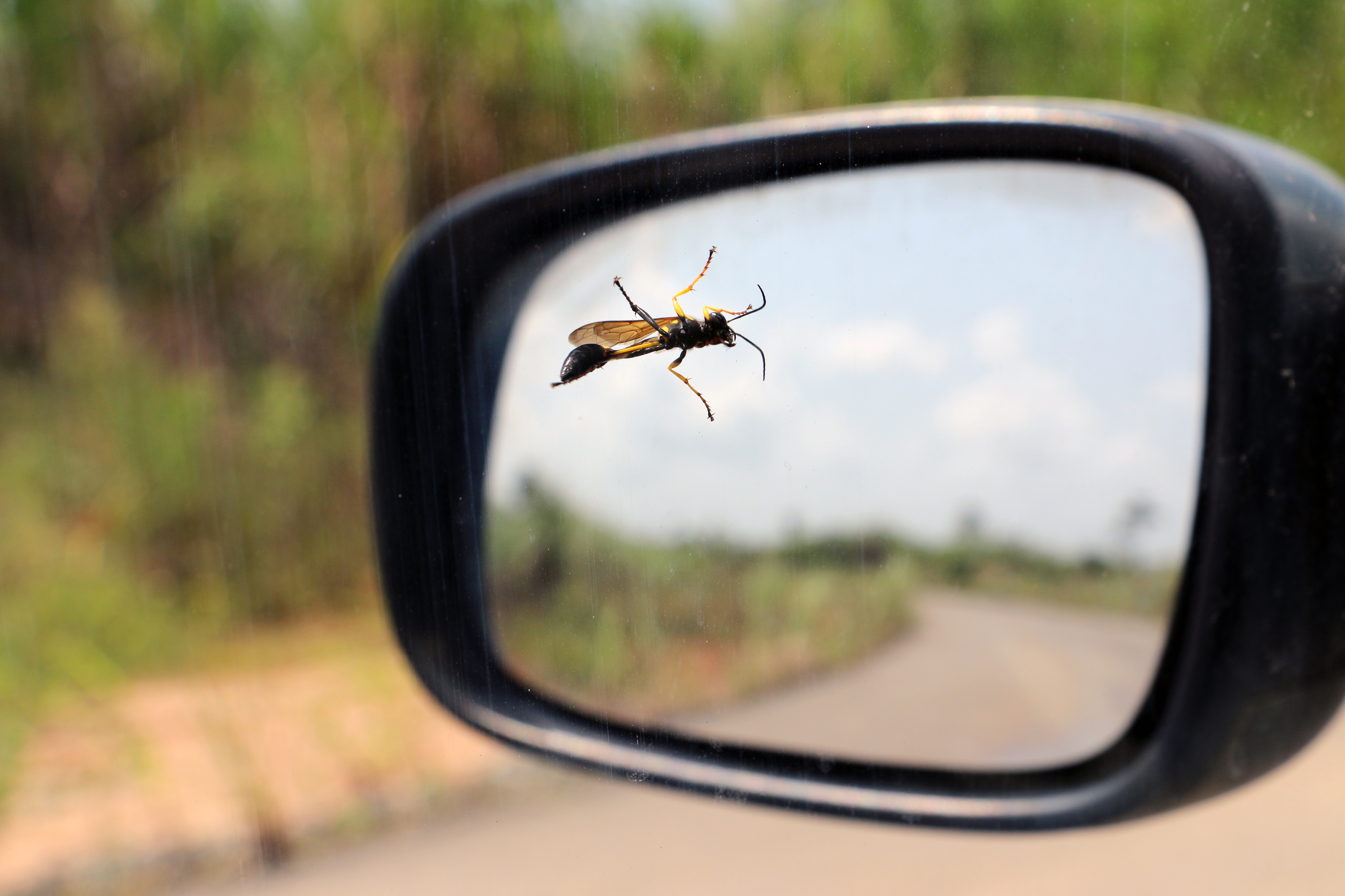 How To Remove Bugs From Your Car