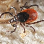 The Rise of Lyme Disease & Other Tick-Borne Illness