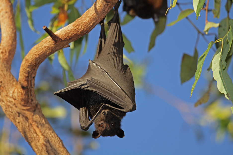 Pest destruct for bats