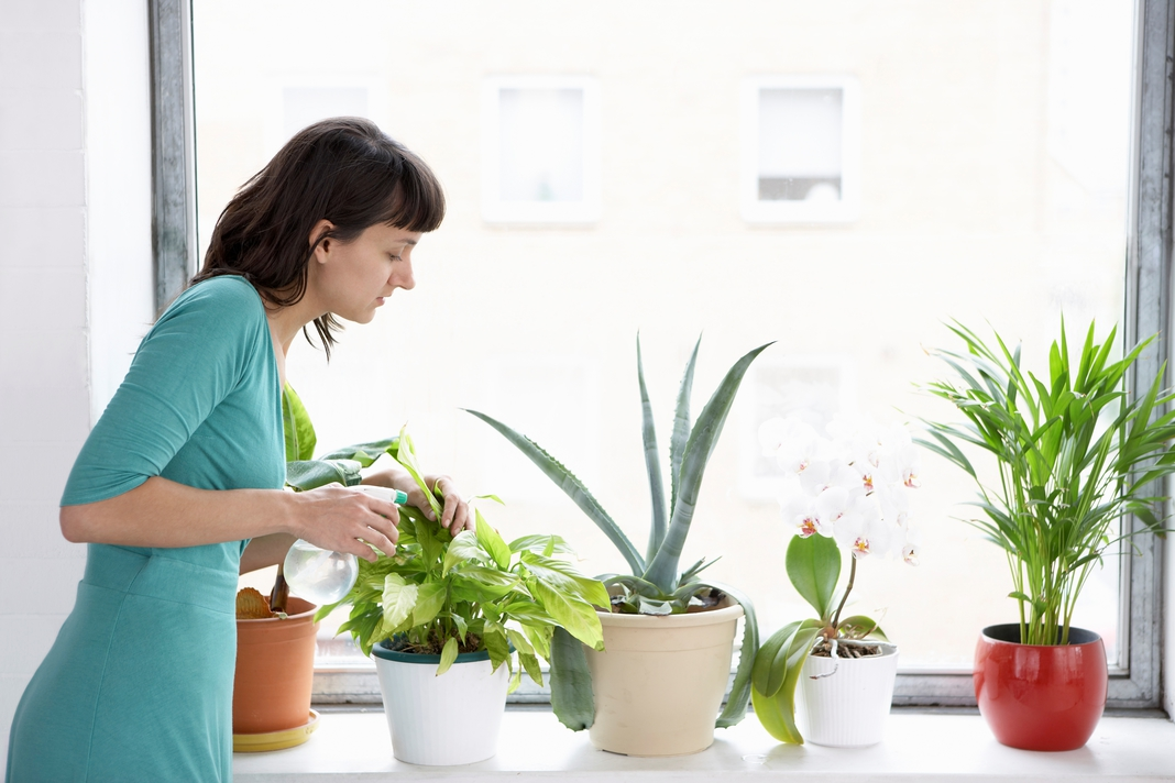 How to Keep Insects Out of Houseplants