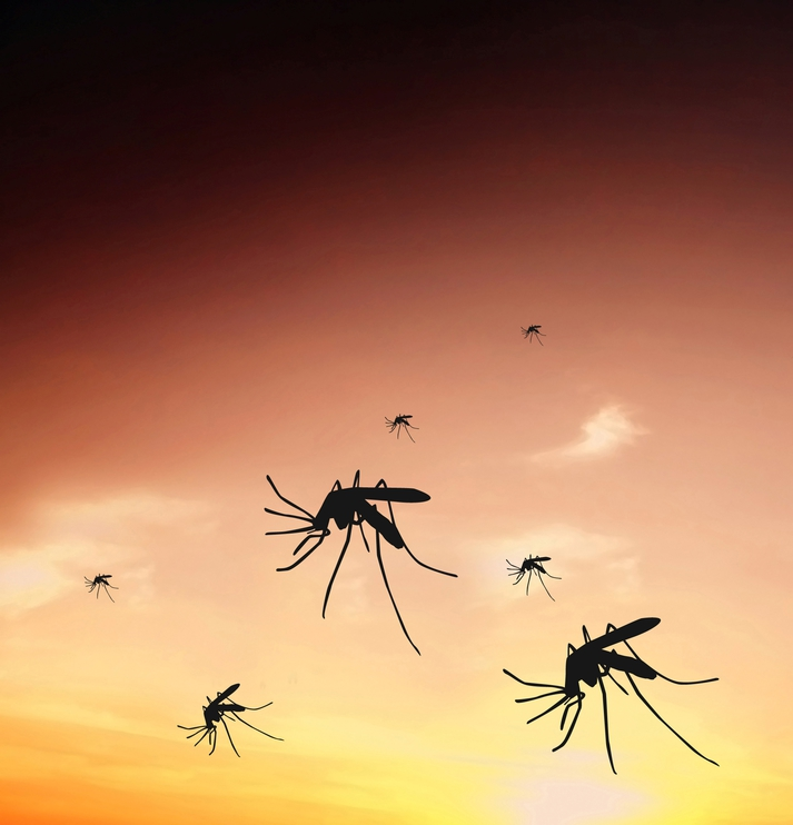Diseases Spread by Bugs in Alabama