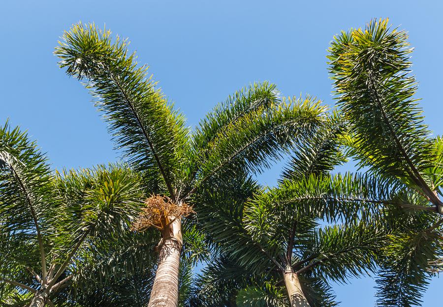 Top Trees That Attract Termites Vulcan Termite Pest Control