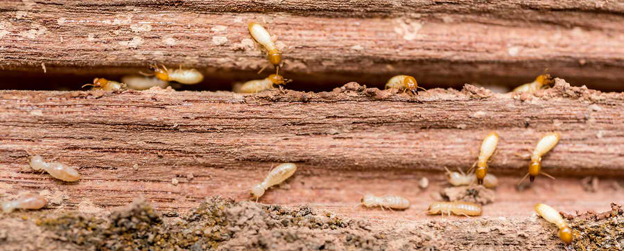 Treating Wood to Prevent Termites - Vulcan Termite & Pest