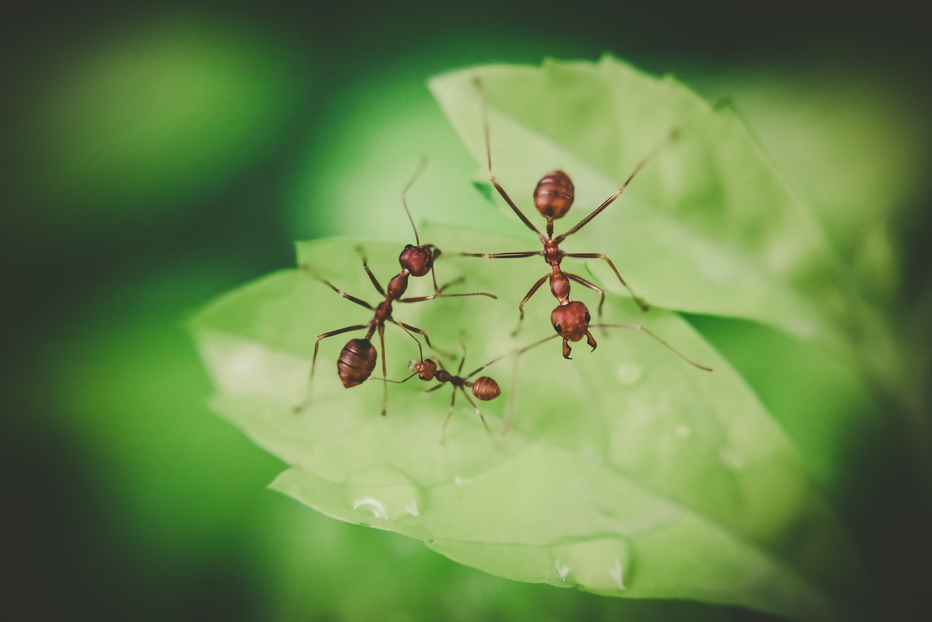 the Smallest Insects in Your Yard