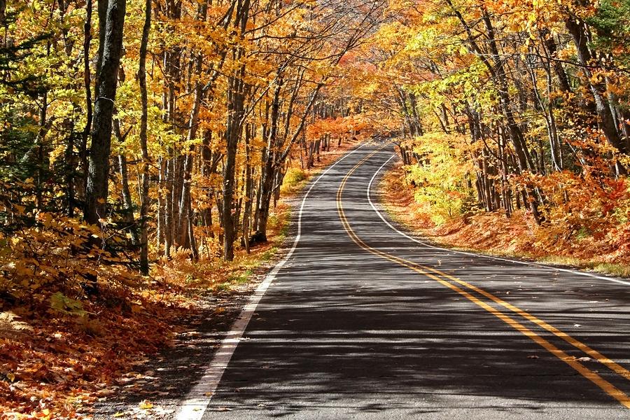 scenic drive through maple trees in michigan