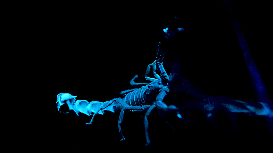 4 Things That Attract Scorpions