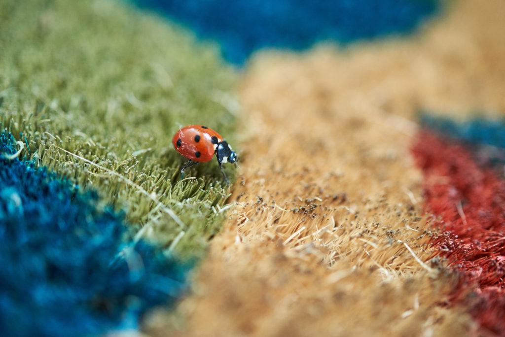 ladybug in home
