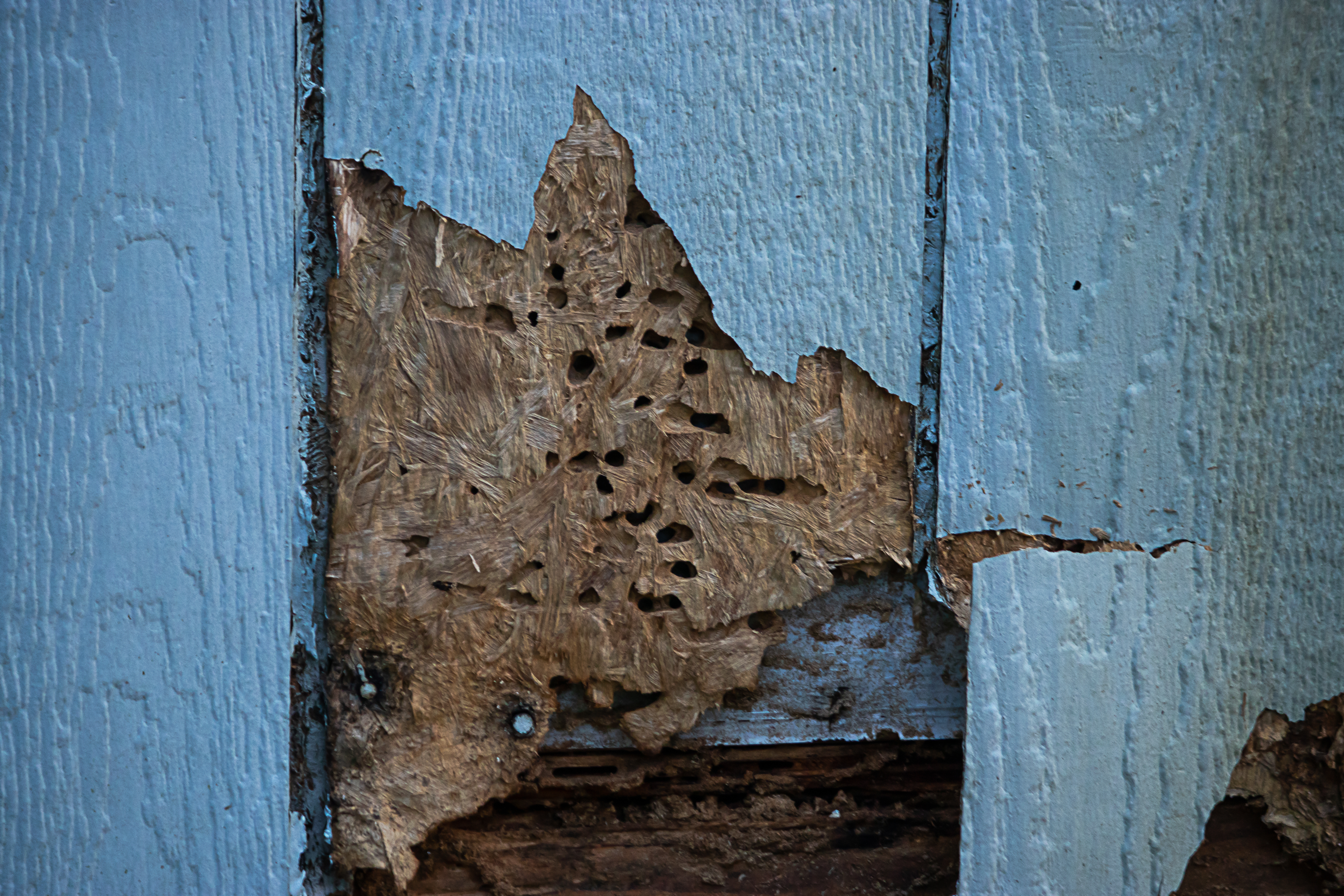 Signs Of Termites Here S What To Look For Vulcan Termite Pest Control